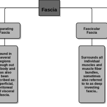 fascia_flow_chart